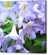 Purple Bells Of Spain Canvas Print