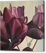 Purple Blooms Cmd1008 Canvas Print