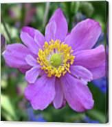 Purple Blossom 1 Canvas Print