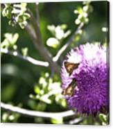 Purple Blossom Canvas Print