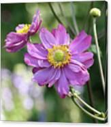Purple Blossoms 2 Canvas Print