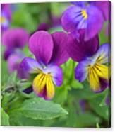 Purple Blue Yellow Canvas Print