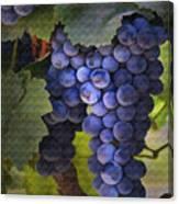 Purple Blush Canvas Print