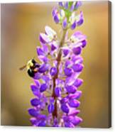 Purple Buzz Canvas Print