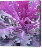 Purple Cabbage Canvas Print