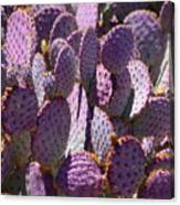 Purple Cacti Canvas Print