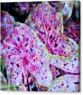 Purple Caladium Canvas Print