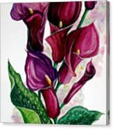 Purple Callas Canvas Print