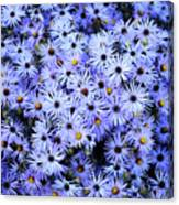 Purple Carpet Canvas Print