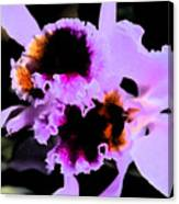 Purple Cattleya Orchid Canvas Print