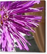 Purple Chinese Aster Canvas Print
