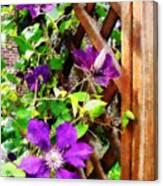 Purple Clematis On Trellis Canvas Print