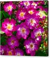 Purple Cluster 2 Canvas Print