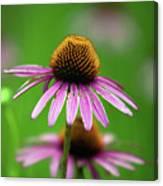Purple Cone Flower Canvas Print