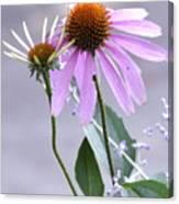 Purple Cornflowers Canvas Print