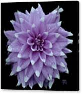 Purple Dahlia Cutout Canvas Print