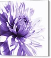 Purple Dahlia Floral Canvas Print