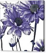 Purple Daisies Canvas Print