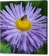 Purple Daisy And Guest Canvas Print