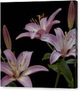 Purple Day Lilies Canvas Print