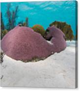Purple Doze  Canvas Print