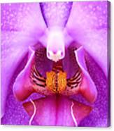 Purple Face In The Orchid. Canvas Print