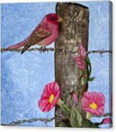Purple Finch And Morning Glories Canvas Print