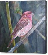 Purple Finch Canvas Print