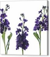 Purple Floral 2 Canvas Print
