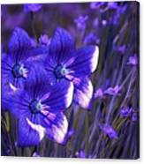 Purple Florwer Abstract Canvas Print