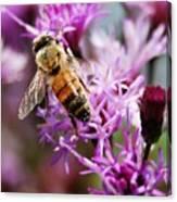 Purple Flower Bee Canvas Print