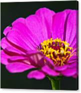 Purple Flower Close Up Canvas Print