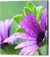 Purple Flower Closeup Canvas Print
