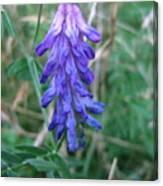 Purple Flower Canvas Print