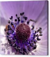 Purple Flower Universe Canvas Print
