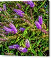 Purple Flowers Of Chiloe Canvas Print