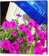 Purple Flowers On White Window 2 Canvas Print