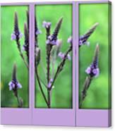 Purple Flowers Through A Window Canvas Print