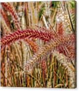 Purple Fountain Grass Abstract By H H Photography Of Florida Canvas Print