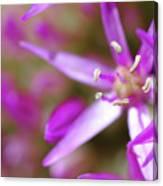 Purple Fragrance Canvas Print