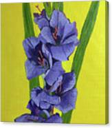Purple Gladiolas Canvas Print