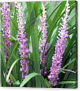 Purple Grass Canvas Print