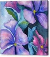 Purple Hibiscus Canvas Print