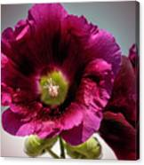 Purple Hollyhock Canvas Print