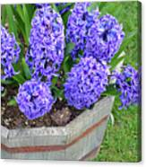 Purple Hyacinth Flowers Planter Canvas Print
