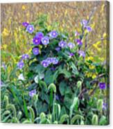 Purple In The Morning Canvas Print
