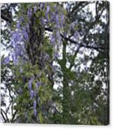 Purple In The Trees Canvas Print