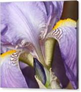 Purple Iris Beauty Canvas Print