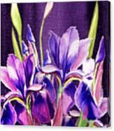 Purple Iris Dance  Canvas Print