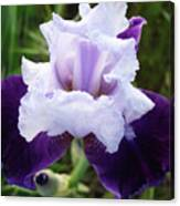 Purple Iris Flower Art Prints Garden Floral Baslee Troutman Canvas Print